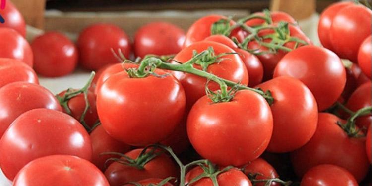Pomidorun necə saxlanmasına aydınlıq gətirildi -